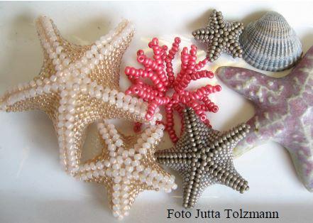Seestern mit Korallenring